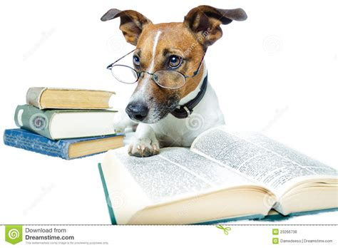 puppy book reading books royalty free stock photos image 23266738