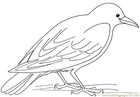 crow bird coloring page crow coloring page free crow coloring pages