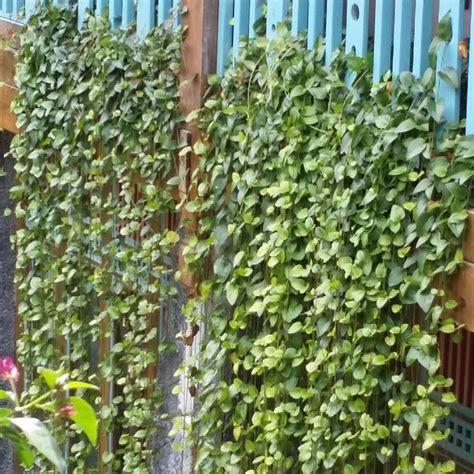 piante per terrazzo piante per terrazzo alcune idee per un esterno strepitoso