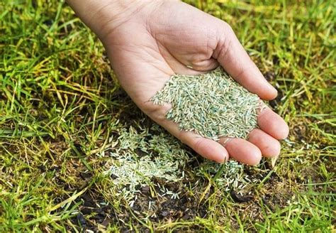 how to guide spring lawn care