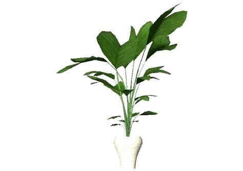 vaso pianta piante 3d pianta in vaso per appartamento acca software
