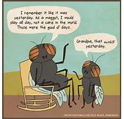 Insect Humor And Science Cartoons About Flies Recalling