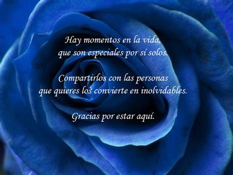 imagenes de rosas azules con frases de amor rosa azules con frases imagui