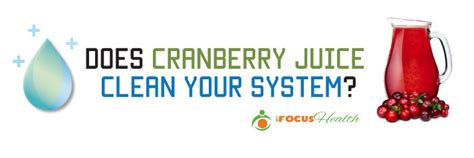 Does Cranberry Juice Detox Your Kidneys by What Everybody Ought To About Cranberry Juice