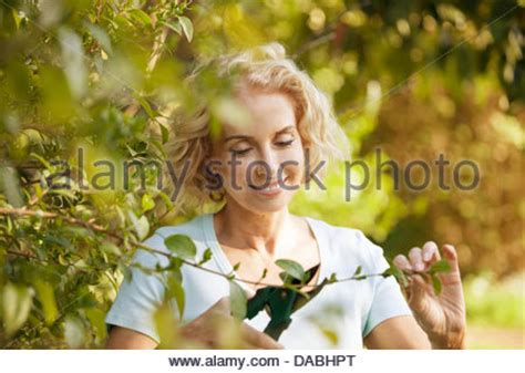 bush trimming women a gardener trimming a hedge stock photo royalty free