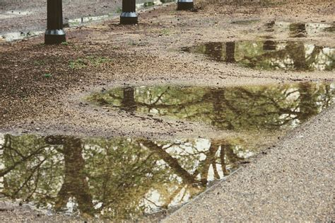 Mirroring Trees trees mirroring puddle 183 free photo on pixabay