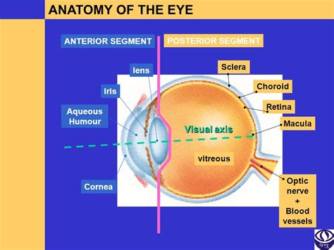 basic structures of the eye ppt download basic structures of the eye ppt download