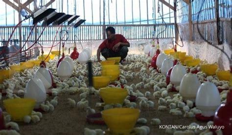 Pokphand Ayam Petelur charoen janji tindaklanjuti permintaan afkir dini