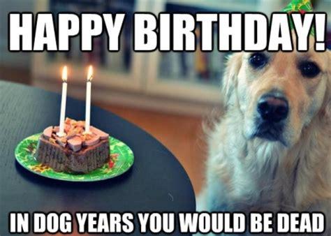 Happy Birthday Meme Dog - top dog happy birthday funny memes 2happybirthday