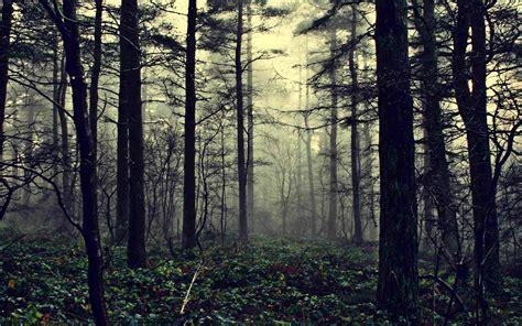 imagenes hd bosques fondos pantalla hd bosques wallpaper imagenes gratis 5