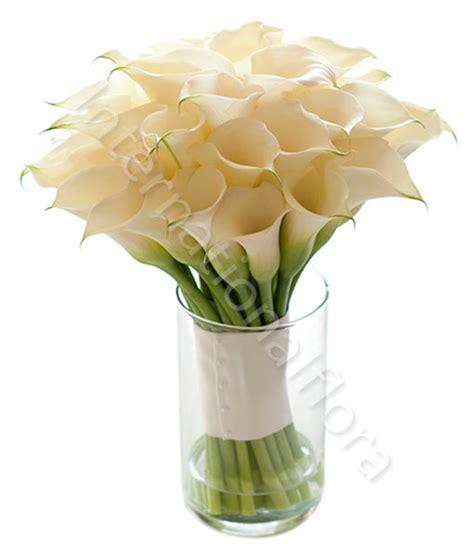 fiori calle bianche bouquet di calle bianche