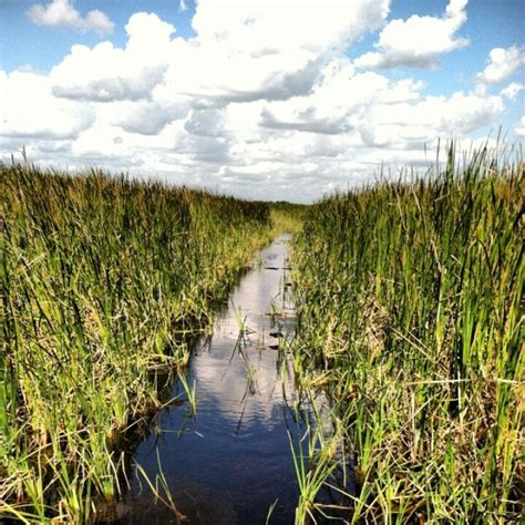 airboat tours ta 39 best boats images on pinterest boats florida