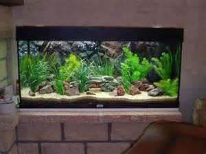 id 233 e d 233 cor aquarium eau douce