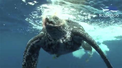 imagenes de animales endemicos especies en peligro de extinci 243 n puerto rico youtube