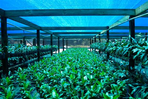 Inside Greenhouse Ideas Polysack Aluminet Chromatinet Anti Insect Net Field