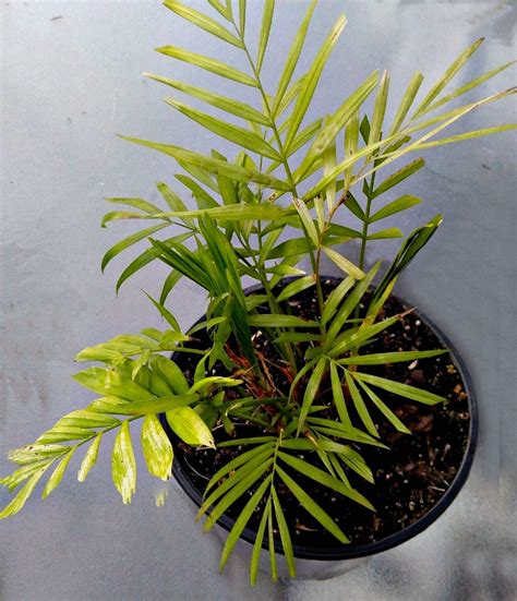 plants that do well in low light low light indoor plants my 20 favorite house plants
