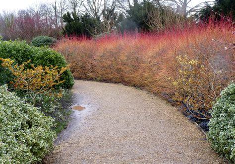 anglesey winter garden anglesey garden