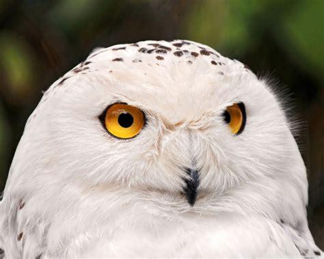 imagenes animales aves wallpapers de animales fondos de pantalla de aves parte