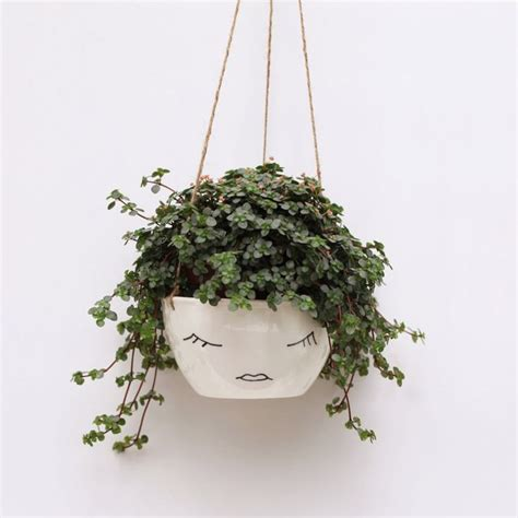 hanging plant 25 best ideas about indoor plant pots on pinterest