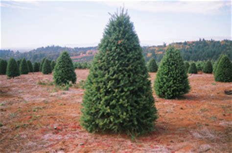 douglas fir christmas tree care a e farms vineyards oregon vineyards grapes and trees