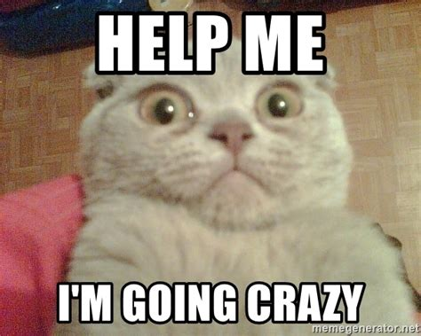 Going Crazy Meme - help me i m going crazy geezus cat meme generator