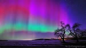 northern lights lights trees and northern lights