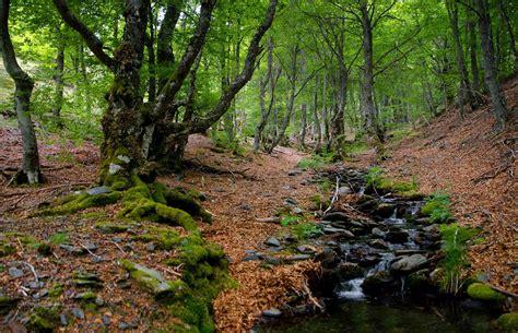 imagenes extrañas en el bosque 191 c 243 mo compiten los 225 rboles en el bosque para sobrevivir