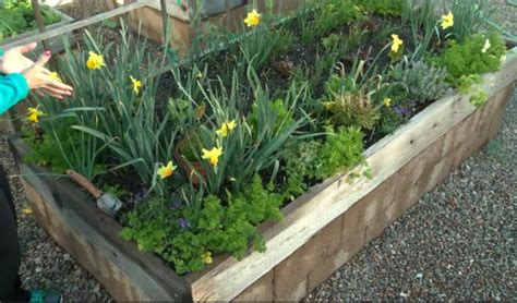 lowes raised garden bed diy raised bed garden free step by step instructions