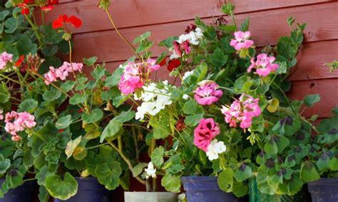 imagenes jardines de verano flores de verano para el balc 243 n decogarden
