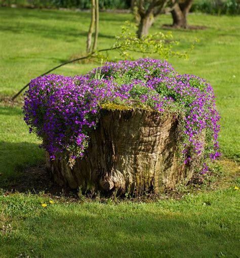tree stumps turned  gorgeous planters part