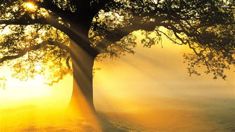 Small Desktop Tree 40 Hd Tree Wallpapers Backgrounds For Free
