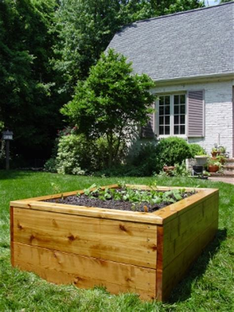 treated lumber vegetable garden is pressure treated wood safe for vegetable gardens