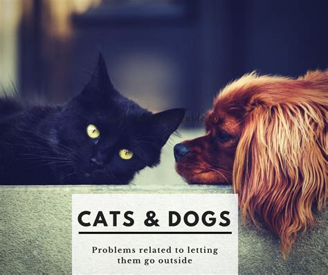 cats and dogs can we keep him how can we keep our indoor cat inside while allowing the