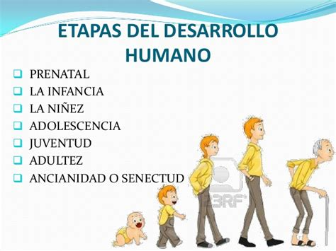 imagenes de desarrollo humano fases del desarrollo humano