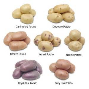 17 best ideas about types of potatoes on pinterest food