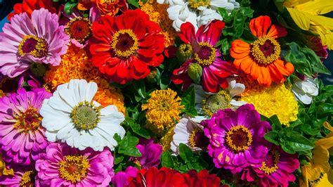 imagenes todo flores 191 cu 225 les son las flores m 225 s bonitas del mundo nombres y