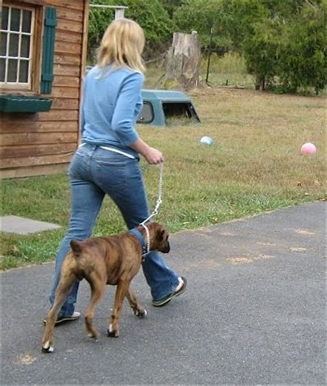 when do puppies start walking the walk the proper way to walk your walking