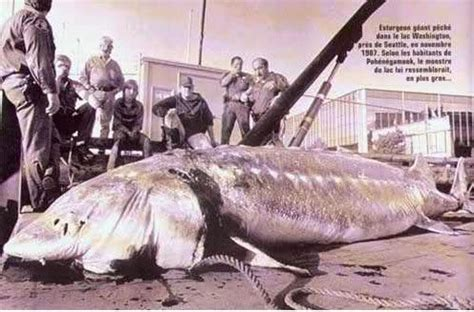 Records In Wisconsin Wi State Record Sturgeon Speared