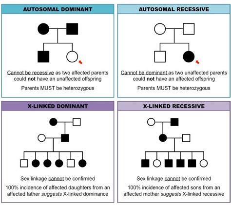 pedigree pattern quiz pedigree charts inheritance cheat sheet genetics