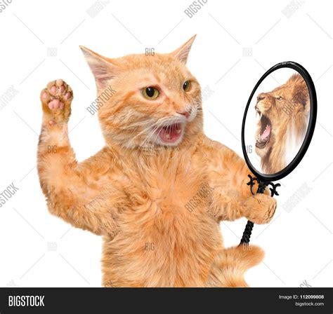 Cat Mirror cat looking into mirror seeing image photo bigstock