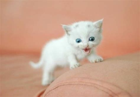 cutest in the world top 10 cutest kittens in the world