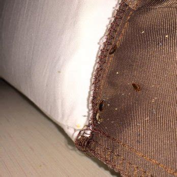 bed bugs san francisco travelodge san francisco airport parking 14 photos 21