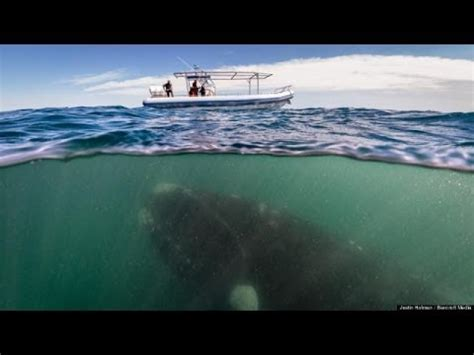 like a boat out of the blue whale hides under boat tourists have no idea youtube