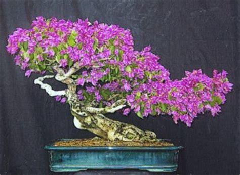 home garden  landscaping indoor bonsai trees