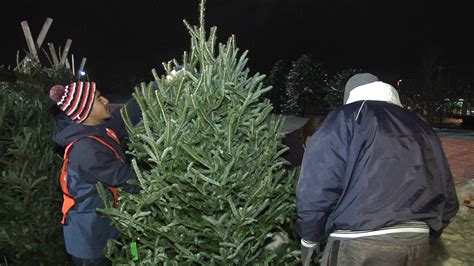 naperville boy scout troop 889 helps cut christmas trees