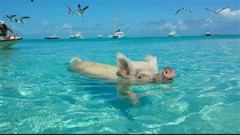 boat browser mini handler pig beach in the bahamas kimcion
