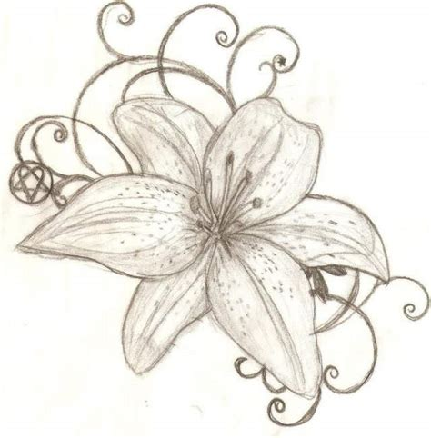 flower drawing lily pencil drawing collection