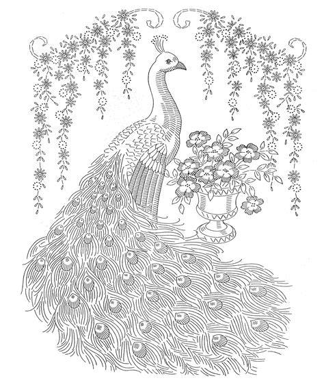 coloring pages of peacock feathers peacock feather colouring pages google search