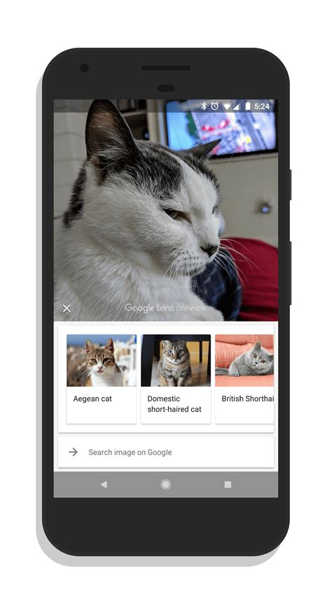google images identify google lens can now identify dog and cat breeds in