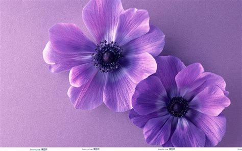 wallpaper flower cute cute purple backgrounds wallpaper cave